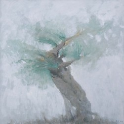 """""""Старая олива"""". Из цикла """"Портреты деревьев"""" (малая)"""